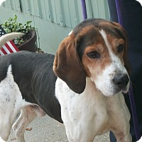 Adopt A Pet :: Starsky - Martinsville, IN