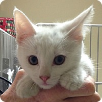 Adopt A Pet :: Candy - Putnam Hall, FL