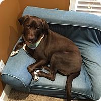 Adopt A Pet :: Jake - Cumming, GA