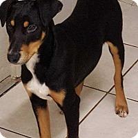 Adopt A Pet :: McCain - Richmond, KY