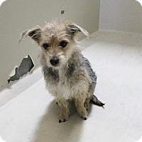 Adopt A Pet :: A11 Paris - Odessa, TX