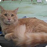 Adopt A Pet :: Funyuns - Agoura Hills, CA