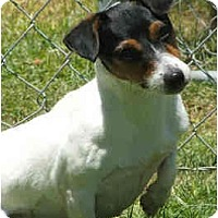 Adopt A Pet :: SPARKIE - Phoenix, AZ