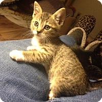 Adopt A Pet :: Butterscotch - San Ramon, CA