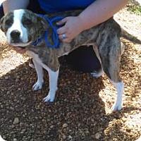 Adopt A Pet :: Lucy - Lebanon, ME