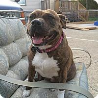 Adopt A Pet :: Big Mama - Eastpointe, MI