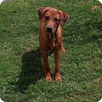 Adopt A Pet :: Jedi - Austin, TX