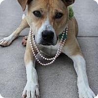 Labrador Retriever Mix Dog for adoption in Yukon, Oklahoma - Lucy