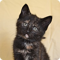 Adopt A Pet :: Clover - Larned, KS