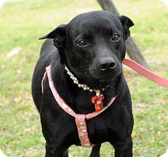Black Dog Rescue Surrey S Facebook