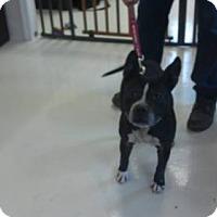 Adopt A Pet :: Ben - Mt. Gilead, OH