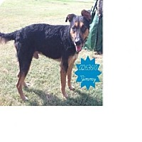 Shepherd (Unknown Type) Mix Dog for adoption in Von Ormy, Texas - Jimmy