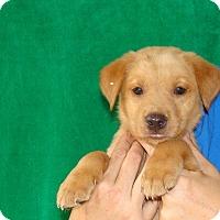 Adopt A Pet :: Cutie - Oviedo, FL