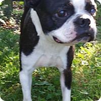 Adopt A Pet :: Sulu - Bridgeton, MO