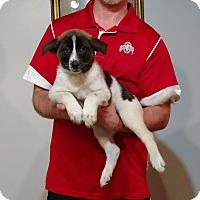Adopt A Pet :: Ginger - New Philadelphia, OH