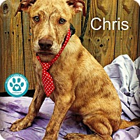 Adopt A Pet :: Chris - Kimberton, PA