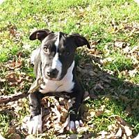 Adopt A Pet :: Hershey D3289 - Shakopee, MN