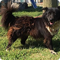 Border Collie Mix Dog for adoption in Sagaponack, New York - Lady