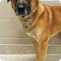 Adopt A Pet :: Gibbs - Shorewood, IL