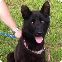 German Shepherd Dog Mix Dog for adoption in Beckley, West Virginia - Charisma