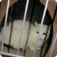Adopt A Pet :: ARIES - Bolingbrook, IL