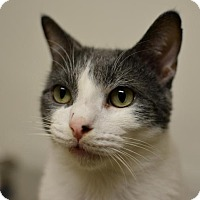 Adopt A Pet :: Troubles - Scituate, MA