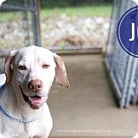 Adopt A Pet :: Joe - Kendallville, IN