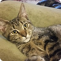 Adopt A Pet :: Tantor - Waldorf, MD