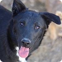 Border Collie Mix Dog for adoption in Von Ormy, Texas - Jade