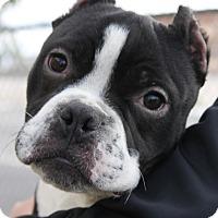 Adopt A Pet :: Diesel and Ruby - Las Vegas, NV