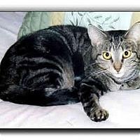 Adopt A Pet :: E.J. - Howell, MI