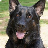 Adopt A Pet :: Magnum - Wayland, MA