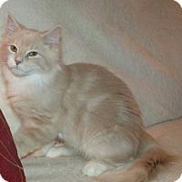 Adopt A Pet :: BENNY - Acme, PA