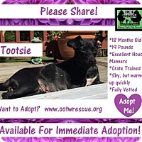 Adopt A Pet :: Tootsie - Little Rock, AR