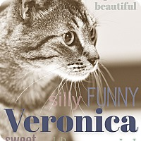 Adopt A Pet :: Veronica - Chicago, IL