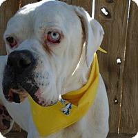 Adopt A Pet :: Jake - Apple Valley, CA