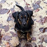 Adopt A Pet :: Maya - Alpharetta, GA