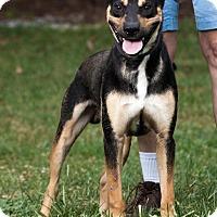 Adopt A Pet :: Max - Marion, NC