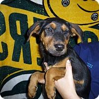 Adopt A Pet :: Piper - Oviedo, FL