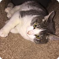 Adopt A Pet :: BLOSSOM - Rancho Cucamonga, CA