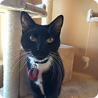 Adopt A Pet :: Tux - Woodward, OK