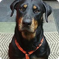 Adopt A Pet :: Hedy - White Hall, AR