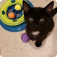 Adopt A Pet :: Twinkles - Duluth, GA