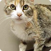 Adopt A Pet :: Cassie - Shorewood, IL