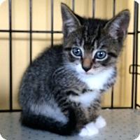 Adopt A Pet :: Jolly Rancher - Island Park, NY