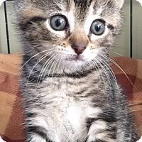 Adopt A Pet :: Jade - Island Park, NY
