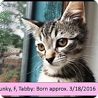 Adopt A Pet :: Punky - Orange, CA