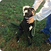 Adopt A Pet :: Gibbs - Beckley, WV