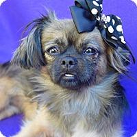Adopt A Pet :: Tory - Irvine, CA