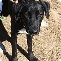 Adopt A Pet :: Ross - Poughkeepsie, NY